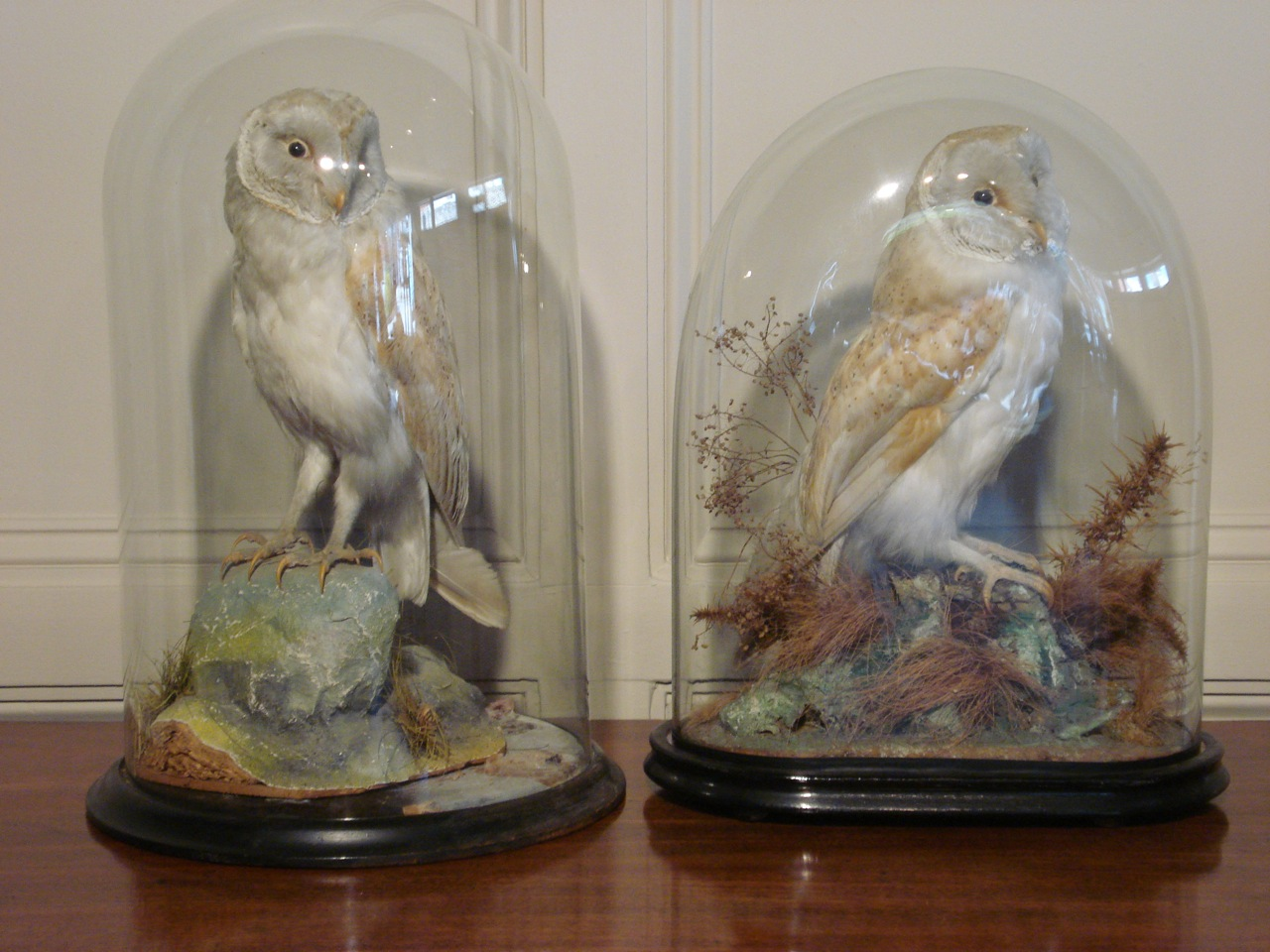 SOLD/19TH CENTURY TAXIDERMY OWL IN A GLASS DOME